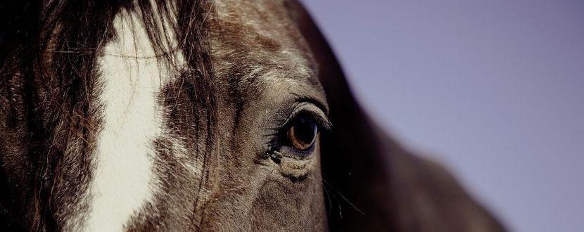CBD zur Unterstützung der Gesundheit des Pferdes