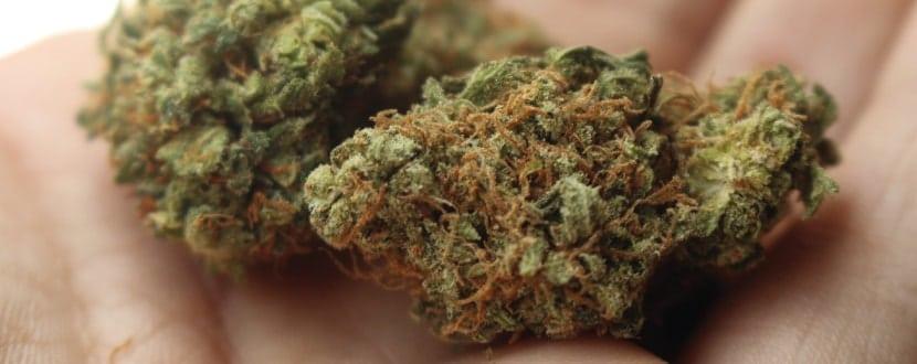 Cannabis mit THC fotografiert.
