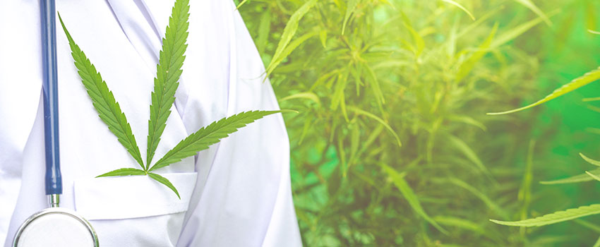 Cannabis Immunsystem