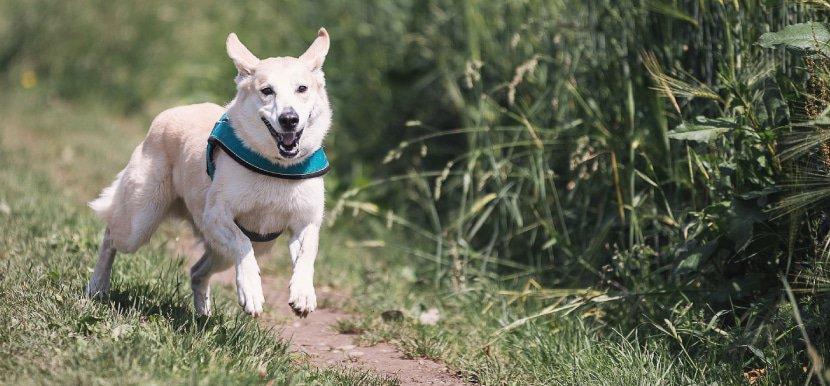 CBD Öl für Hunde: Erfahrungen