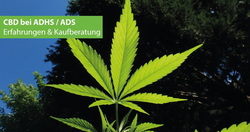 CBD bei ADHS und gegen ADS Erfahrungen & Kaufberatung