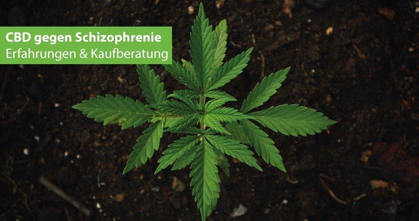 CBD gegen Schizophrenie