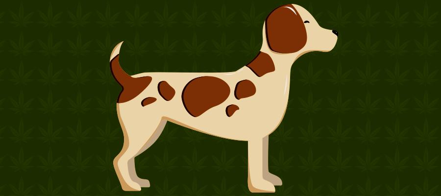 Illustration zu CBD bei Hunde