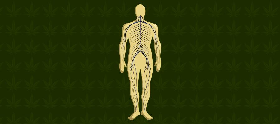 Illustration zu CBD bei Neuropathie