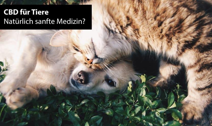 CBD Öl für Tiere wie Hunde und Katzen