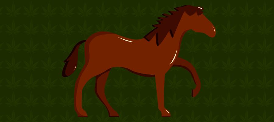 Illustration zu CBD bei Pferde