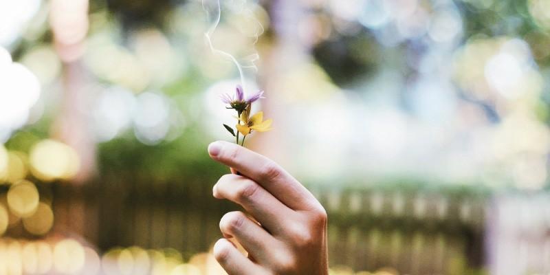 Fumer du CBD à base de plantes