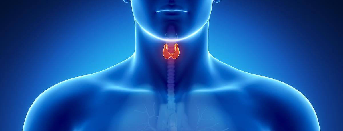 glande thyroïde cbd