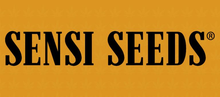 CBD Sensi Seeds Erfahrungen