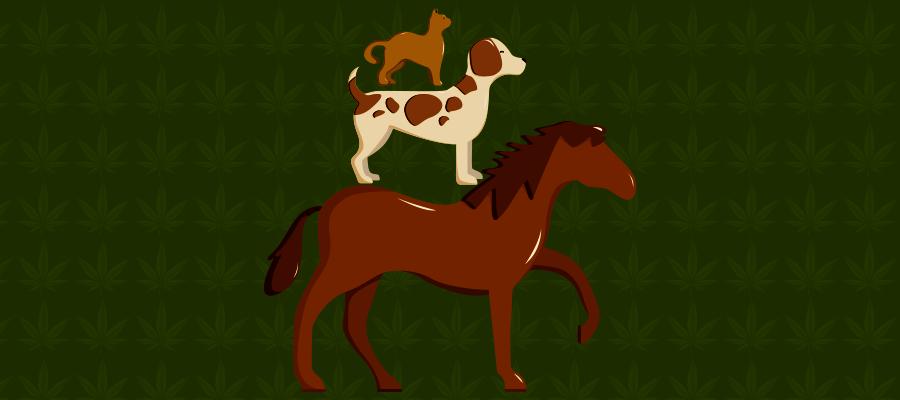 Illustration zu CBD bei Tiere