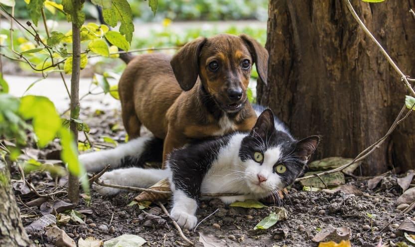 CBD Tropfen bei Tieren richtig dosieren durch Futter oder z. B. Hundekekse