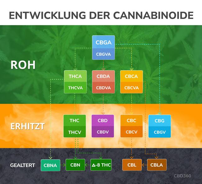 Entwicklung Cannabinoide