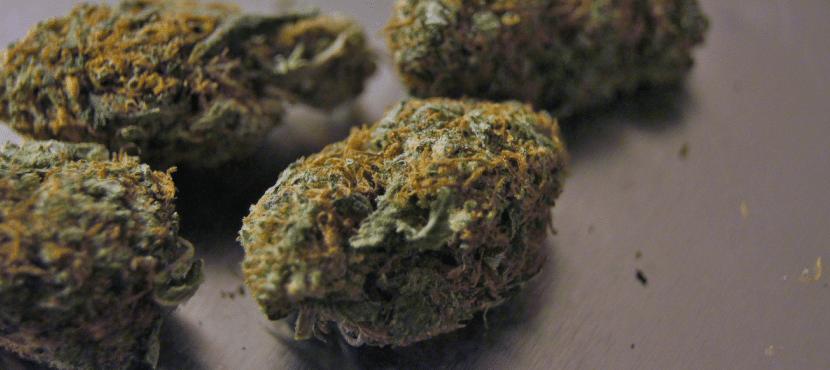 Getrocknete Cannabispflanze