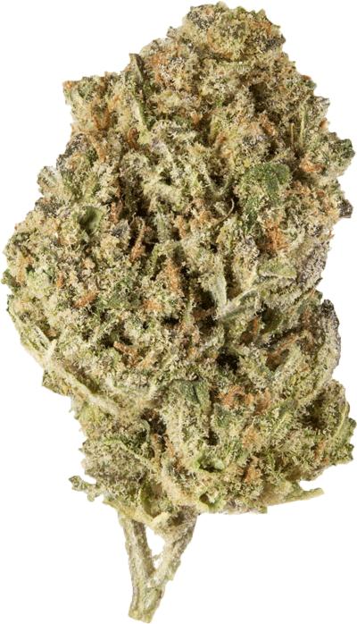 Naturalpes CBD Blüten Cannabis Harlequin