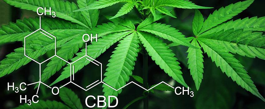 Nebenwirkungen bei Cannabisöl