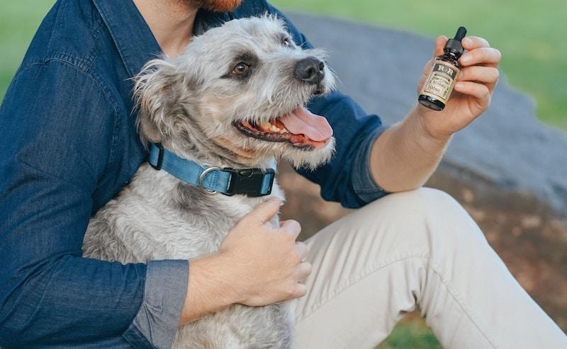 überdosis von cbd bei hunden